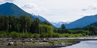 """Trees in front of mountains in Quinault Rainforest, Olympic National Park, Washington State, USA by Panoramic Images - 18"""" x 9"""""""