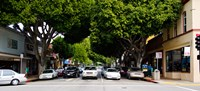 """Cars on the road in Downtown San Luis Obispo, San Luis Obispo County, California, USA by Panoramic Images - 20"""" x 9"""""""