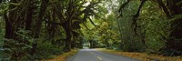 "Road passing through a rainforest, Hoh Rainforest, Olympic Peninsula, Washington State, USA by Panoramic Images - 27"" x 9"", FulcrumGallery.com brand"