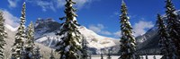 Snow covered trees with mountain range in the background, Emerald Lake, Yoho National Park, Canada Fine Art Print