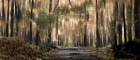 """Enchanted forest by Panoramic Images - 21"""" x 9"""""""