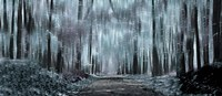 """Enchanted forest (black and white) by Panoramic Images - 21"""" x 9"""""""