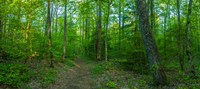 """Forest, Great Smoky Mountains National Park, Blount County, Tennessee, USA by Panoramic Images - 20"""" x 9"""", FulcrumGallery.com brand"""