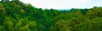 """Trees on the bay, Rempart and Mamelles peaks, Tamarin Bay, Mauritius island, Mauritius by Panoramic Images - 29"""" x 9"""""""