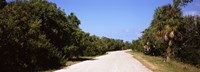"Road passing through Ding Darling National Wildlife Refuge, Sanibel Island, Lee County, Florida, USA by Panoramic Images - 25"" x 9"", FulcrumGallery.com brand"