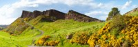 Gorse bushes growing on Arthur's Seat, Edinburgh, Scotland Fine Art Print