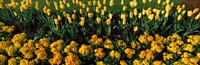 """Yellow Flower Bed, Hyde Park, City of Westminster, London, England by Panoramic Images - 28"""" x 9"""""""