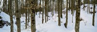 """Forest near Lake Bled, Upper Carniola, Slovenia by Panoramic Images - 27"""" x 9"""", FulcrumGallery.com brand"""