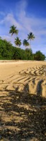 """Palm trees on the beach, Rarotonga, Cook Islands, New Zealand by Panoramic Images - 9"""" x 27"""""""