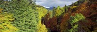 """Canyon at Killiecrankie, River Garry, Pitlochry, Perth And Kinross, Scotland by Panoramic Images - 27"""" x 9"""", FulcrumGallery.com brand"""