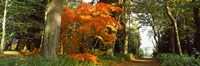 """Autumn trees at Thorp Perrow Arboretum, Bedale, North Yorkshire, England by Panoramic Images - 27"""" x 9"""", FulcrumGallery.com brand"""