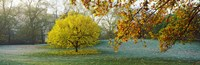 """Frost in autumn, St. James's Park, City Of Westminster, London, England by Panoramic Images - 28"""" x 9"""""""