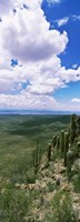 "Clouds over a landscape, Tucson Mountain Park, Tucson, Arizona, USA by Panoramic Images - 9"" x 25"", FulcrumGallery.com brand"