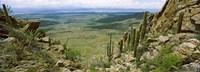 Saguaro Cactus Tucson Mountain Park Arizona