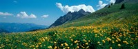 """Field of buttercup flowers, French Riviera, France by Panoramic Images - 25"""" x 9"""" - $28.99"""