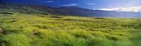 Grassland Kula Maui Hawaii USA