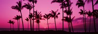 Silhouette of palm trees at dusk, Hawaii, USA Fine Art Print
