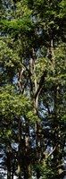"""Low angle view of a tree, Hawaii, USA by Panoramic Images - 9"""" x 24"""", FulcrumGallery.com brand"""