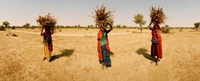 "Women carrying firewood on their heads, India by Panoramic Images - 22"" x 9"""