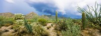 "Saguaro National Park, Tucson, Arizona by Panoramic Images - 25"" x 9"""