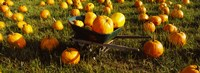 "Wheelbarrow in Pumpkin Patch, Half Moon Bay, California, USA by Panoramic Images - 25"" x 9"""