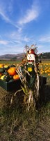 "Scarecrow in Pumpkin Patch, Half Moon Bay, California (vertical) by Panoramic Images - 9"" x 25"""