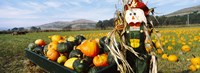"Scarecrow in Pumpkin Patch, Half Moon Bay, California (horizontal) by Panoramic Images - 25"" x 9"""