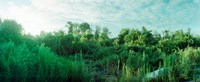 """Greenery along Fort Tilden Beach, Fort Tilden, Queens, New York City, New York State, USA by Panoramic Images - 22"""" x 9"""", FulcrumGallery.com brand"""