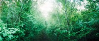 """Trail through the woods along Fort Tilden beach, Queens, New York City, New York State, USA by Panoramic Images - 21"""" x 9"""""""