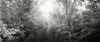 """Trail through the woods at Fort Tilden beach, Queens, New York City, New York State, USA by Panoramic Images - 21"""" x 9"""""""