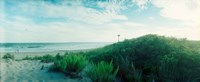 """Plants on the beach, Fort Tilden Beach, Fort Tilden, Queens, New York City, New York State, USA by Panoramic Images - 22"""" x 9"""""""