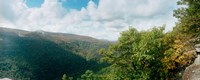 """Trees on mountain, view from Sunset Rock, Kaaterskill Falls area, Catskill Mountains, New York State, USA by Panoramic Images - 23"""" x 9"""""""