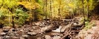 """Forest in the Catskill Mountains, New York State by Panoramic Images - 23"""" x 9"""""""