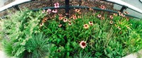 """Flower bed, High Line, Chelsea, Manhattan, New York City, New York State, USA by Panoramic Images - 22"""" x 9"""""""