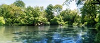 """Pond in the Central Park, Manhattan, New York City, New York State, USA by Panoramic Images - 21"""" x 9"""""""