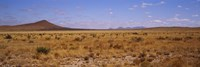 """Dry grass and bush at Big Bend National Park, Texas, USA by Panoramic Images - 27"""" x 9"""""""
