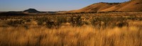 """Dry grass on a landscape, Texas, USA by Panoramic Images - 27"""" x 9"""""""