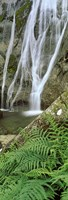 "Ferns and the Aber Falls, Abergwyngregyn, Gwynedd, Wales by Panoramic Images - 9"" x 26"""