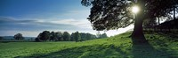 "Sun shining through tree in a park, Hovingham Park, Ryedale, North Yorkshire, England by Panoramic Images - 27"" x 9"""
