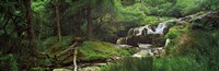 "Waterfall in a forest, Pistyll Rhaeadr, Powys, Wales by Panoramic Images - 28"" x 9"""