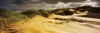 "Marram grass on the beach, Sands of Forvie, Newburgh, Aberdeenshire, Scotland by Panoramic Images - 27"" x 9"""