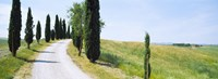 """Cypress trees along farm road, Tuscany, Italy by Panoramic Images - 25"""" x 9"""""""