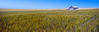 """Old barn in a field, Palouse County, Washington State, USA by Panoramic Images - 27"""" x 9"""""""