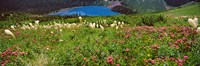 """Beargrass with Grinnell Lake in the background, Montana by Panoramic Images - 27"""" x 9"""""""