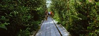 """People walking on walkway in an elevated park, High Line, New York City, New York State, USA by Panoramic Images - 25"""" x 9"""""""
