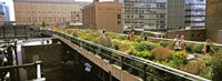 """Tourists in an elevated park, High Line, Manhattan, New York City, New York State, USA by Panoramic Images - 25"""" x 9"""""""
