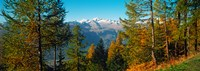 """Trees in autumn at Simplon Pass, Valais Canton, Switzerland (horizontal) by Panoramic Images - 25"""" x 9"""""""