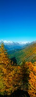 """Trees in autumn at Simplon Pass, Valais Canton, Switzerland (vertical) by Panoramic Images - 9"""" x 24"""""""