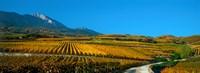 Vineyards in Autumn Valais Canton Switzerland