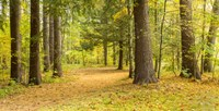 """Forest in autumn, New York State, USA by Panoramic Images - 18"""" x 9"""", FulcrumGallery.com brand"""